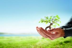 дерево новой жизни
