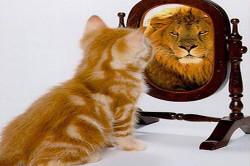 Самоуважение и самооценка